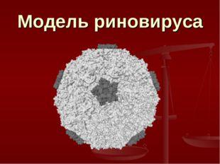 Модель риновируса