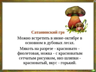 Сатанинский гриб Можно встретить в июне-октябре в основном в дубовых лесах.