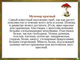 Мухомор красный Самый известный населению гриб, так как растет повсеместно в
