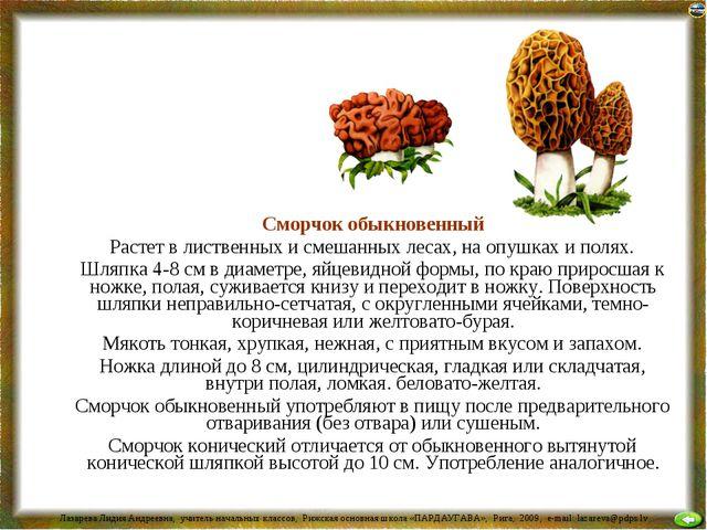 Сморчок обыкновенный Растет в лиственных и смешанных лесах, на опушках и пол...