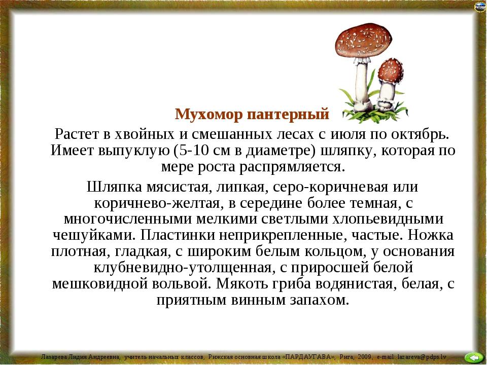 Мухомор пантерный Растет в хвойных и смешанных лесах с июля по октябрь. Имее...