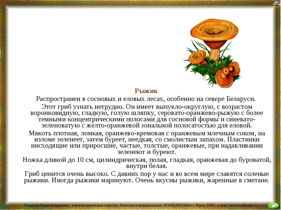 Рыжик Распространен в сосновых и еловых лесах, особенно на севере Беларуси....