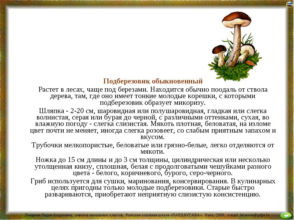 Подберезовик обыкновенный Растет в лесах, чаще под березами. Находится обычн...
