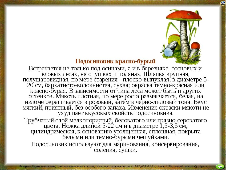 Подосиновик красно-бурый Встречается не только под осинами, а и в березняке,...