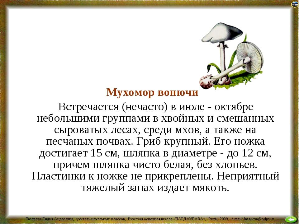 Мухомор вонючий Встречается (нечасто) в июле - октябре небольшими группами в...