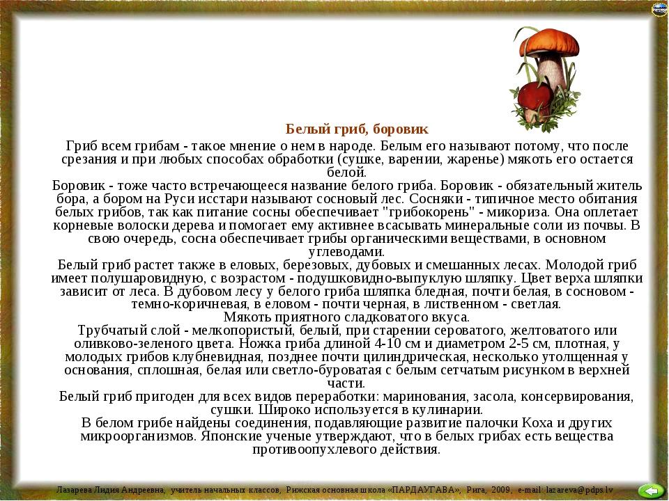 Белый гриб, боровик Гриб всем грибам - такое мнение о нем в народе. Белым ег...