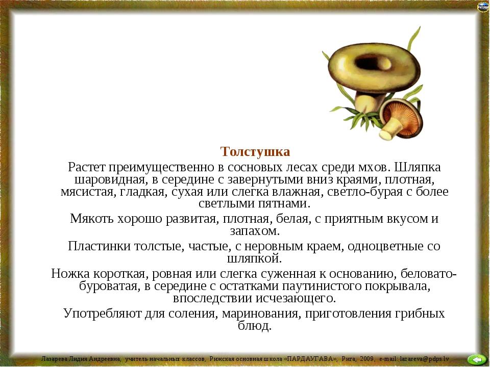 Толстушка Растет преимущественно в сосновых лесах среди мхов. Шляпка шаровид...