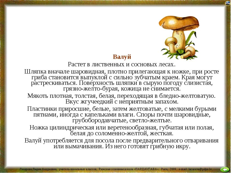 Валуй Растет в лиственных и сосновых лесах. Шляпка вначале шаровидная, плотн...