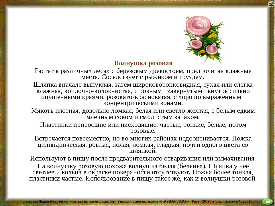 Волнушка розовая Растет в различных лесах с березовым древостоем, предпочита...
