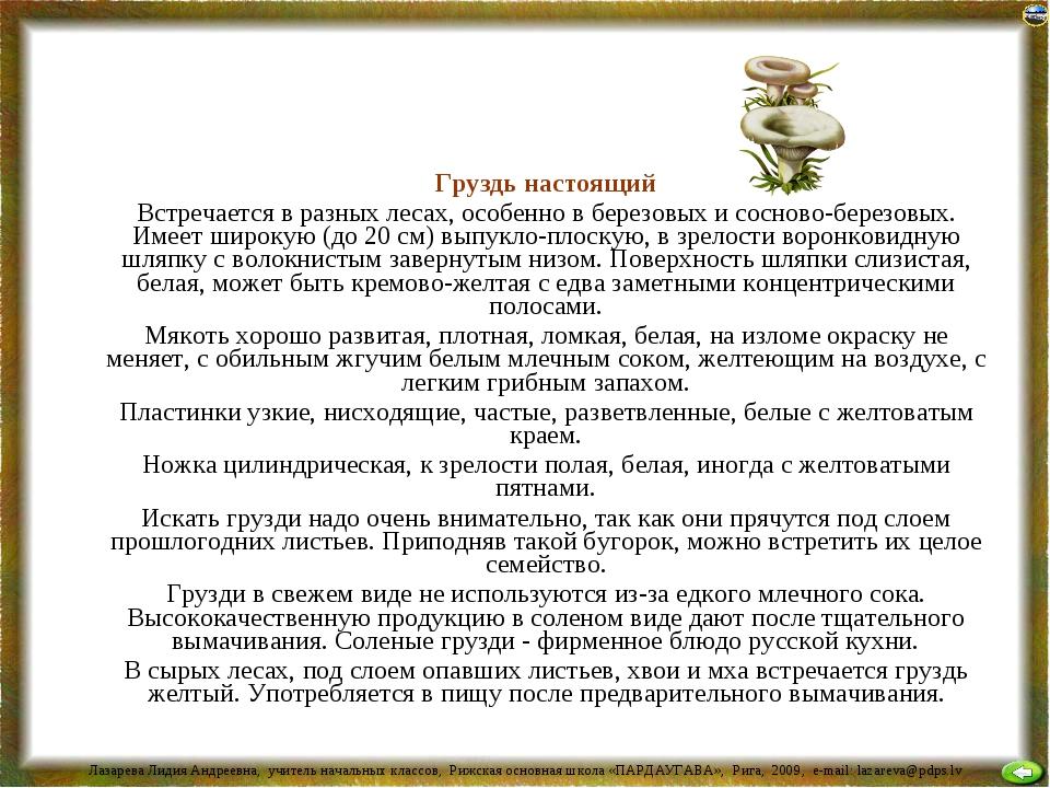 Груздь настоящий Встречается в разных лесах, особенно в березовых и сосново-...