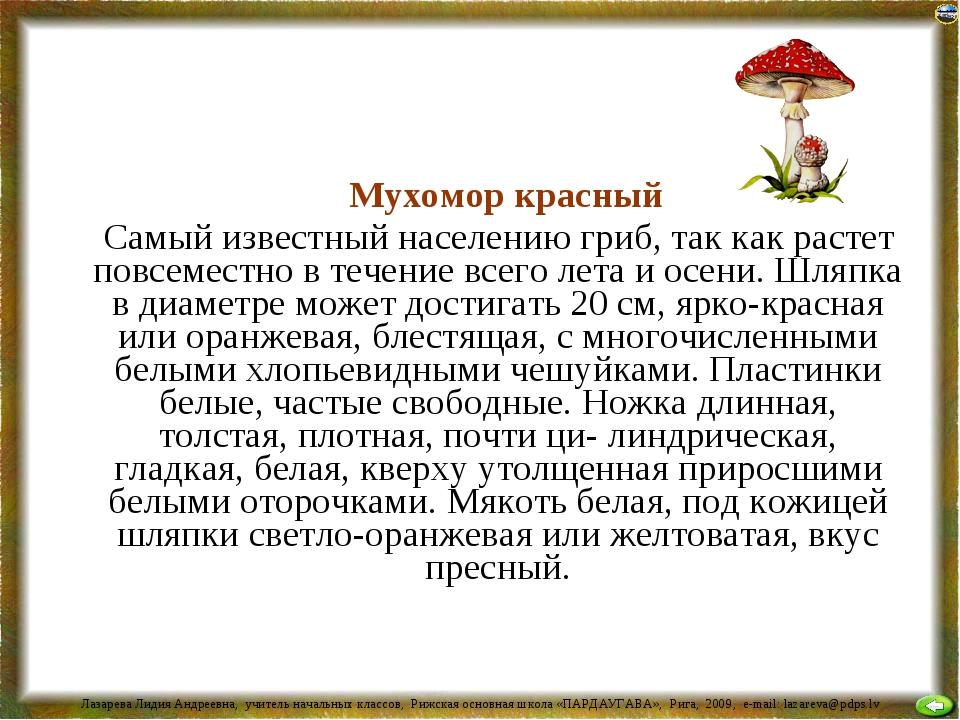 Мухомор красный Самый известный населению гриб, так как растет повсеместно в...