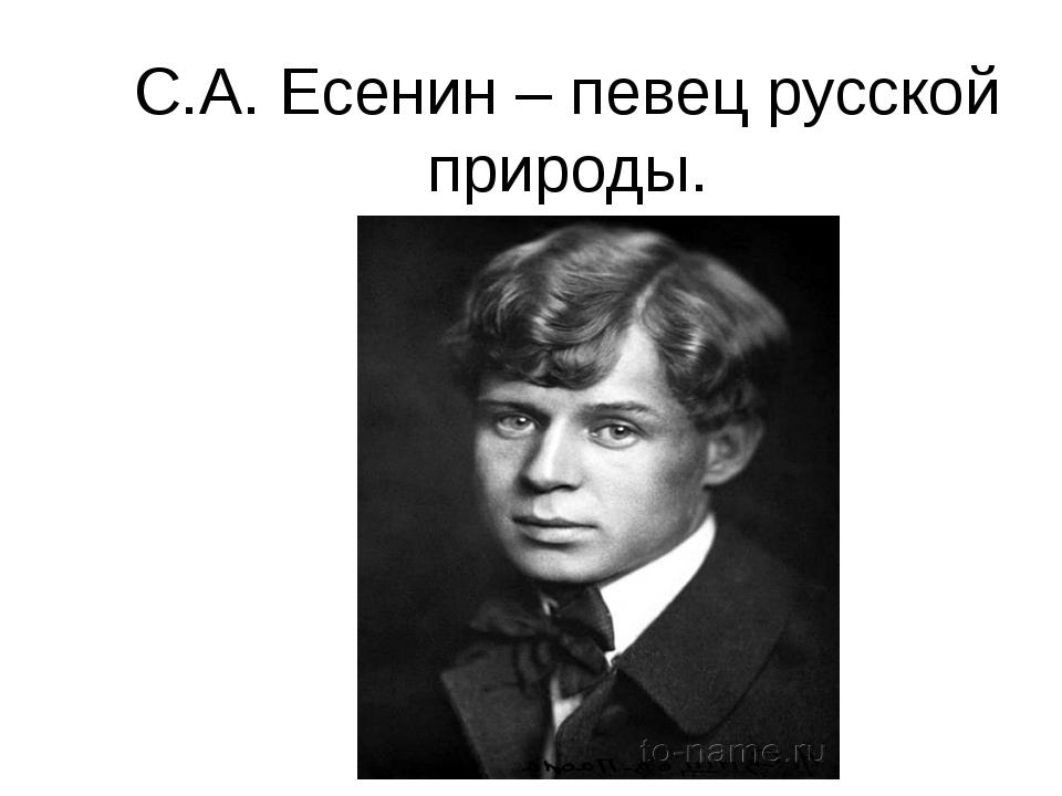 С.А. Есенин – певец русской природы.