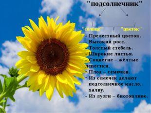 """""""подсолнечник"""" """"солнце"""" """"цветок"""" - Прелестный цветок. - Высокий рост. - Толс"""