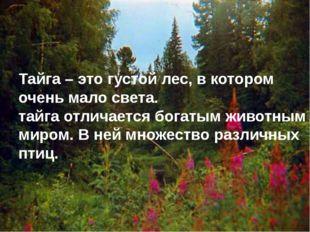 Тайга – это густой лес, в котором очень мало света. тайга отличается богатым