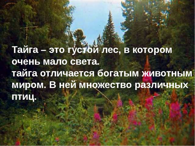Тайга – это густой лес, в котором очень мало света. тайга отличается богатым...