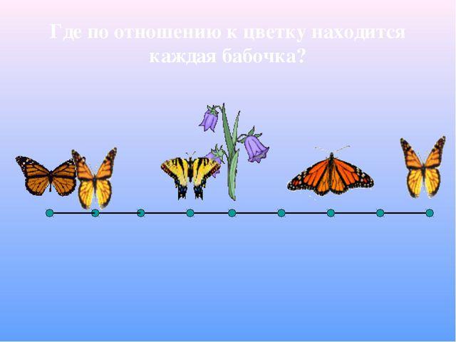 Где по отношению к цветку находится каждая бабочка?