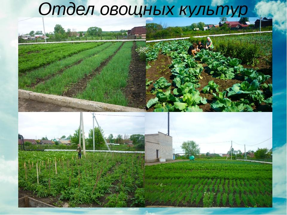 Отдел овощных культур