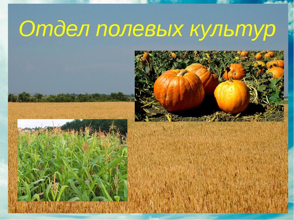 Отдел полевых культур