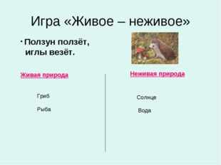Игра «Живое – неживое» Живая природа Неживая природа Ползун ползёт, иглы везё