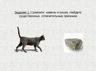 Задание 1: Сравните камень и кошку. Найдите существенные отличительные призна