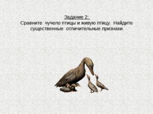 Задание 2: Сравните чучело птицы и живую птицу. Найдите существенные отличите