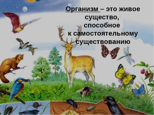 Организм – это живое существо, способное к самостоятельному существованию