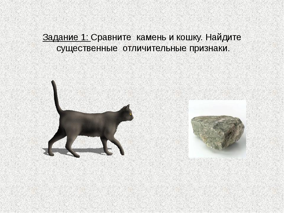 Задание 1: Сравните камень и кошку. Найдите существенные отличительные призна...