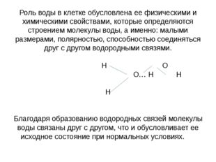 Роль воды в клетке обусловлена ее физическими и химическими свойствами, котор