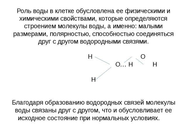 Роль воды в клетке обусловлена ее физическими и химическими свойствами, котор...