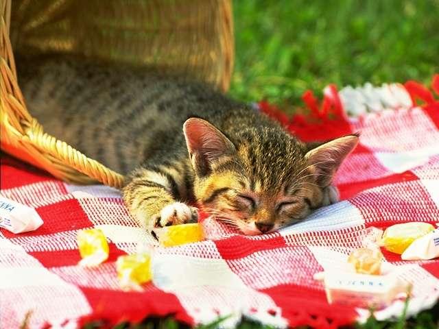 kitten112