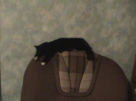 Кошка 002