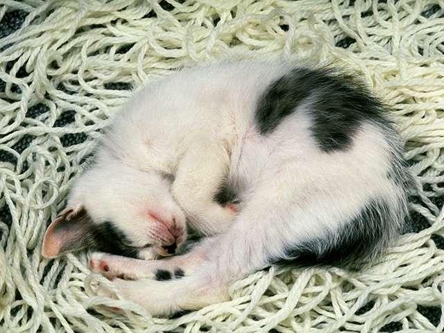 kitten143