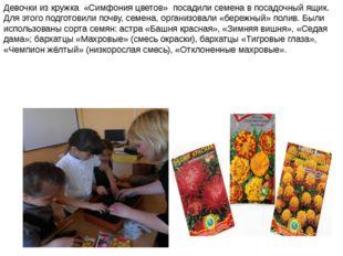 Девочки из кружка «Симфония цветов» посадили семена в посадочный ящик. Для э