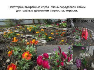 Некоторые выбранные сорта очень порадовали своим длительным цветением и яркос
