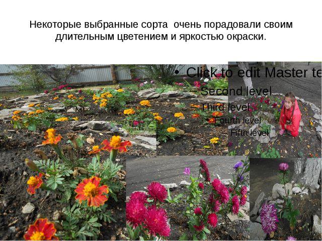 Некоторые выбранные сорта очень порадовали своим длительным цветением и яркос...