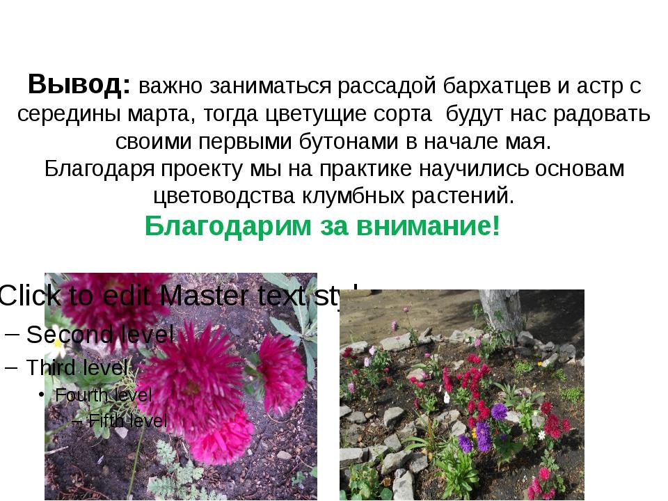 Вывод: важно заниматься рассадой бархатцев и астр с середины марта, тогда цве...