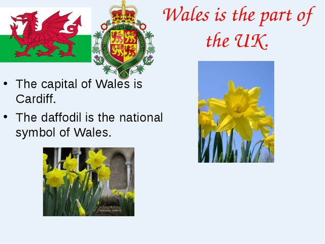 Wales is the part of the UK. The capital of Wales is Cardiff. The daffodil is...