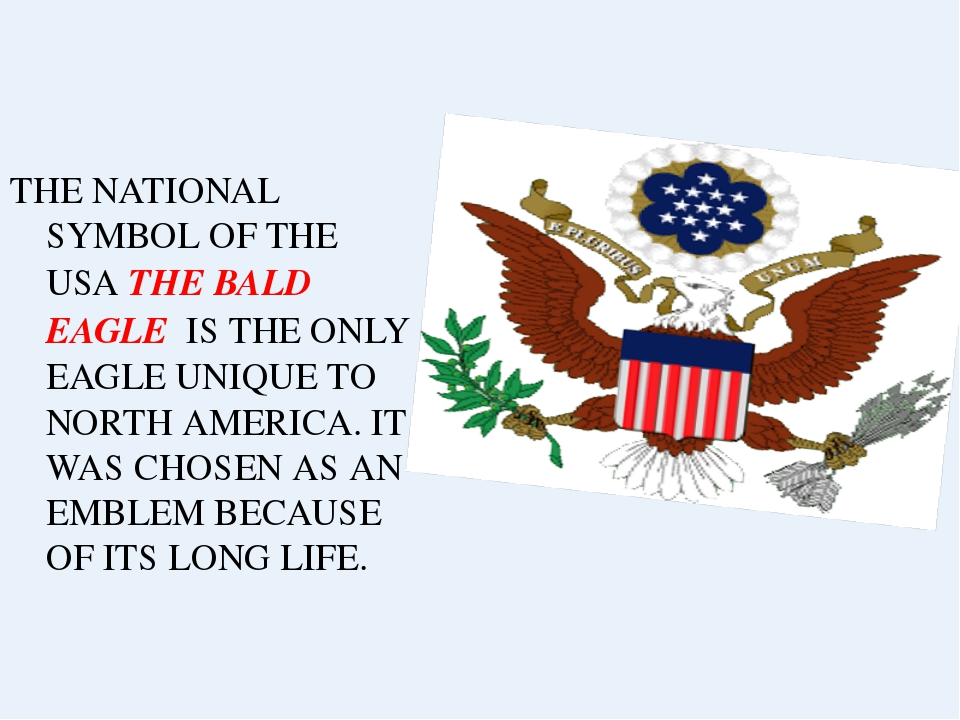 THE NATIONAL SYMBOL OF THE USA THE BALD EAGLE IS THE ONLY EAGLE UNIQUE TO NOR...