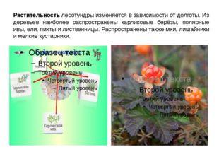 Растительность лесотундры изменяется в зависимости от долготы. Из деревьев на