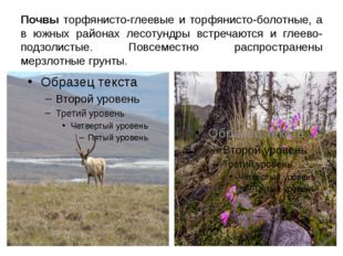 Почвы торфянисто-глеевые и торфянисто-болотные, а в южных районах лесотундры