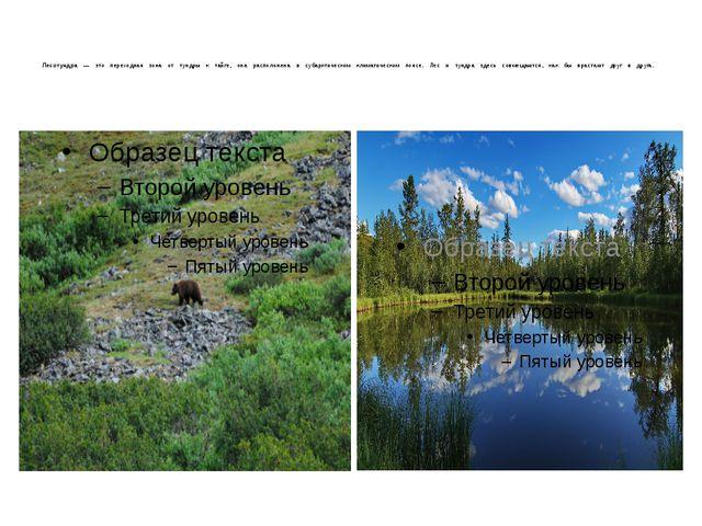 Лесотундра — это переходная зона от тундры к тайге, она расположена в субарк...