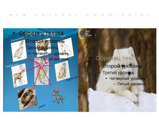 Животный мир лесотундры - лемминги, северные олени, песцы, куропатки, полярн...
