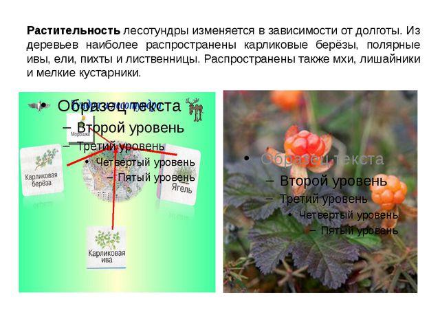 Растительность лесотундры изменяется в зависимости от долготы. Из деревьев на...