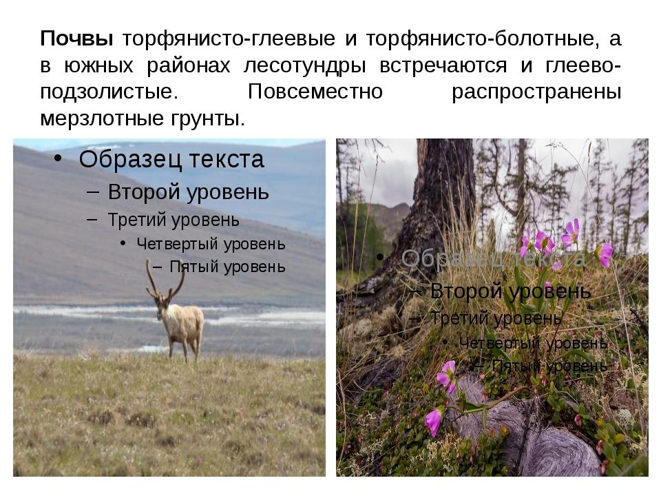 Почвы торфянисто-глеевые и торфянисто-болотные, а в южных районах лесотундры...