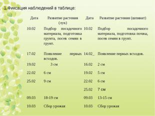 Фиксация наблюдений в таблице: ДатаРазвитие растения (лук)ДатаРазвитие ра