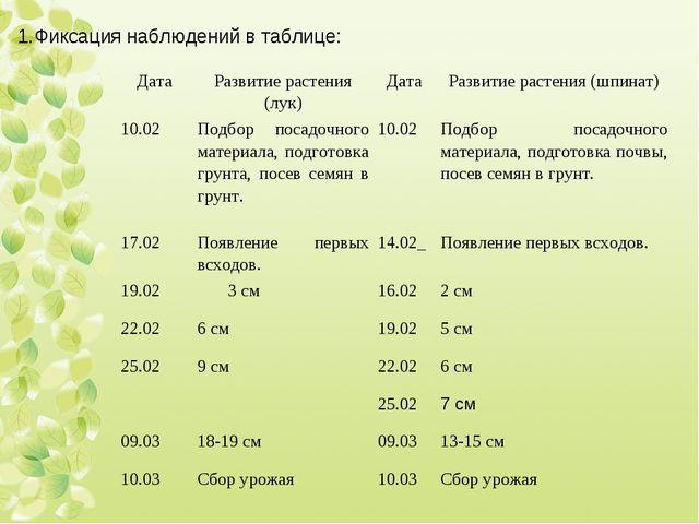 Фиксация наблюдений в таблице: ДатаРазвитие растения (лук)ДатаРазвитие ра...