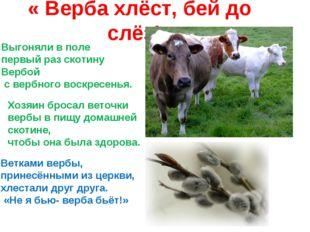 « Верба хлёст, бей до слёз!» Выгоняли в поле первый раз скотину Вербой с верб