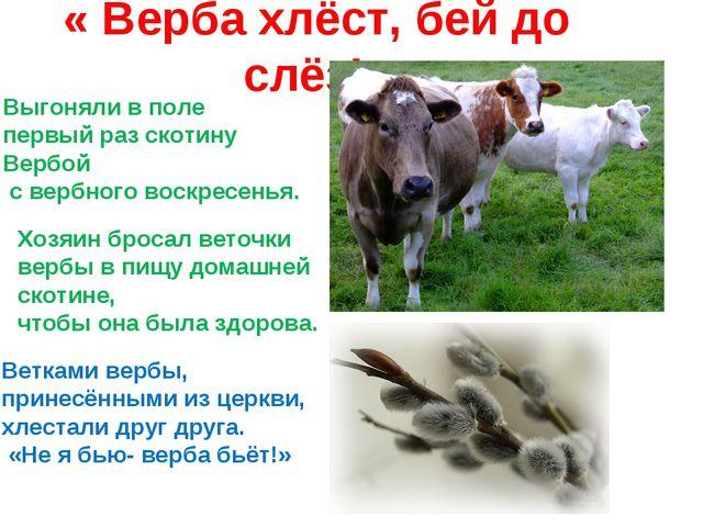 « Верба хлёст, бей до слёз!» Выгоняли в поле первый раз скотину Вербой с верб...