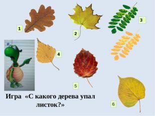 1 2 3 4 5 6 Игра «С какого дерева упал листок?»