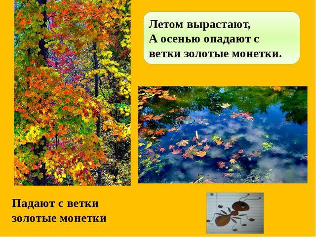Падают с ветки золотые монетки Летом вырастают, А осенью опадают с ветки золо...